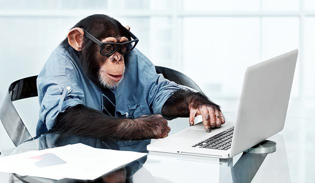 monkey_testing